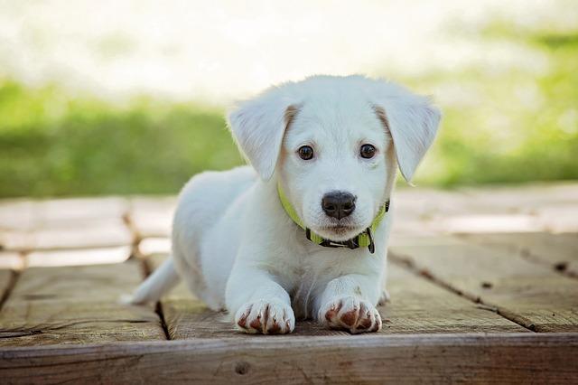 מה להכין לפני שמביאים כלב הביתה וכיצד להתכונן נפשית